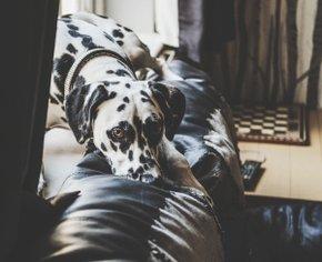 5 товаров для твоего пса, которые пригодятся на карантине