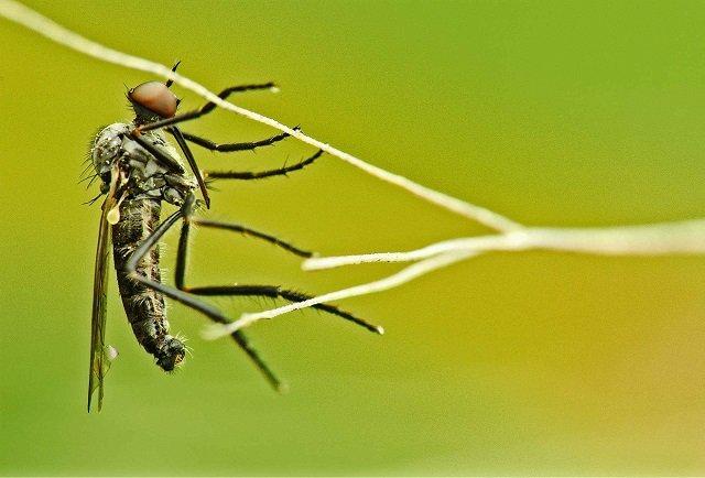 Кофейная гуща - средство от насекомых